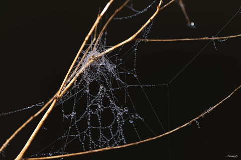 Framed Spider Web Covered In Dew Print
