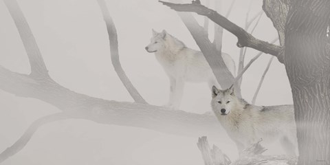 Framed White Wolves In Mist Print