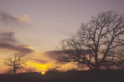 Framed Sunset And Tree Silhouettes II Print