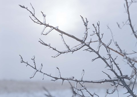 Framed Blue Sky And Frosted Branch I Print
