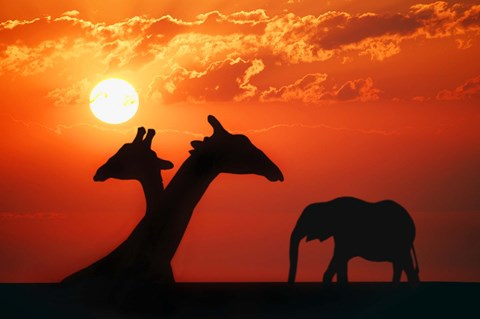 Giraffe Sunset Silhouette Fine Art Print By Designpics At