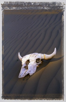 Framed Deserted Skull Brown Sand Print