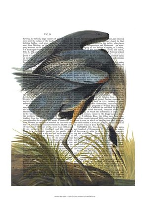 Framed Blue Heron 1 Print