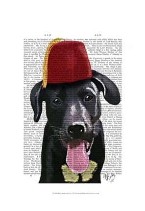 Framed Black Labrador With Fez Print