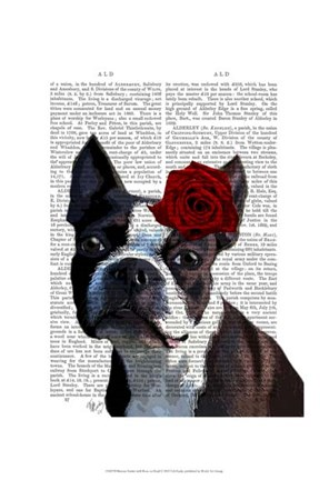 Framed Boston Terrier with Rose on Head Print