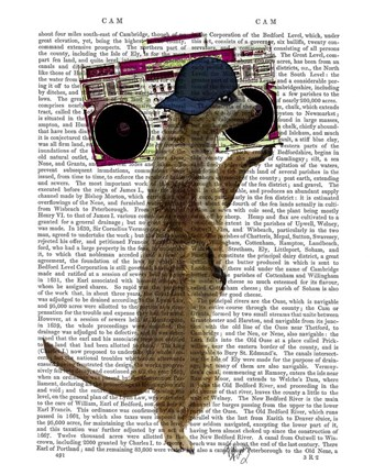 Framed Meerkat with Boom Box Ghetto Blaster Print