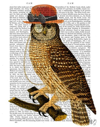 Framed Owl with Steampunk Style Bowler Hat Print