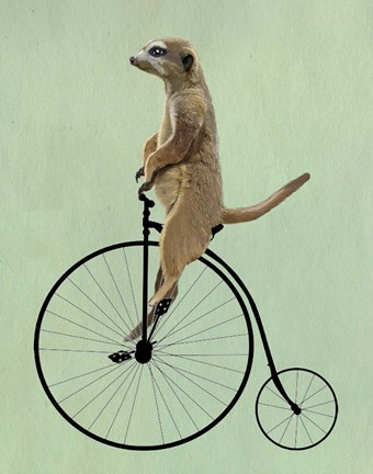 Framed Meerkat on Black Penny Farthing Print