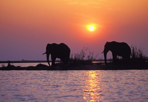 Framed Elephants at Sunset Print