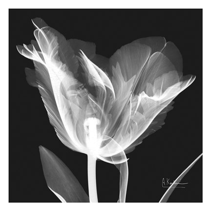 Framed Lusty Tulip 1 Print