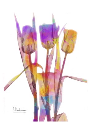 Framed Tulips B16 Watercolor Print