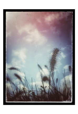 Framed Grass Stalks With Border Print
