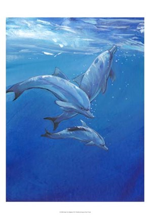 Framed Under Sea Dolphins Print