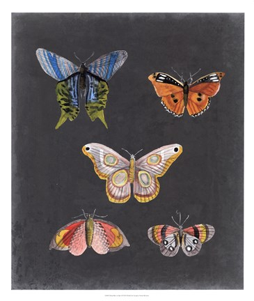 Framed Butterflies on Slate II Print