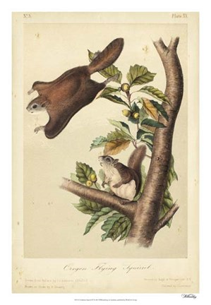 Framed Audubon Squirrel IV Print