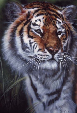Framed Tiger In The Midst Print
