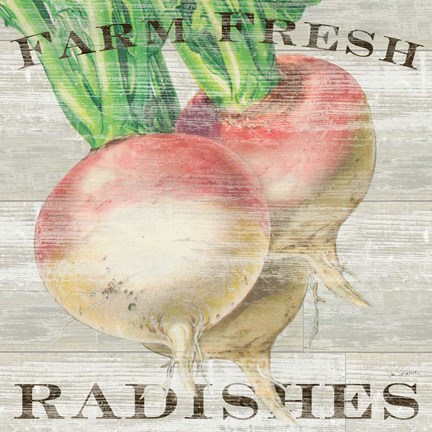 Framed Farm Fresh Radishes Print