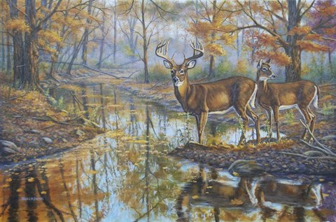 Framed Brookside Retreat - Whitetails Print
