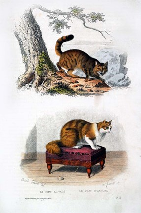 Framed Wild Cat and Angora Cat Print