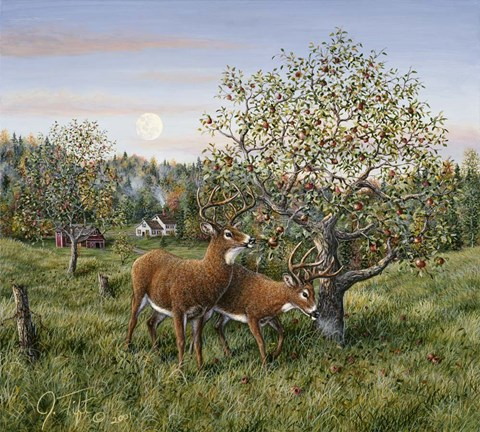 Framed Whitetails Under The Apple Tree Print