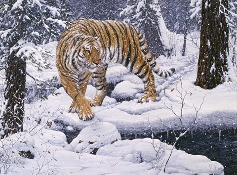 Framed Silent Hunter- Siberian Tiger Print