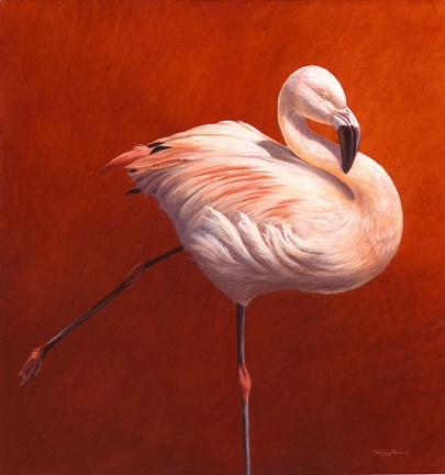 Framed Flame Bird Flamingo Print