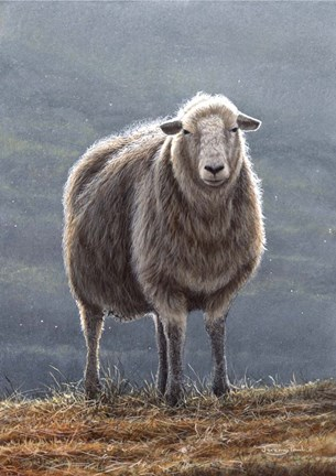Framed Herdwick Sheep Print