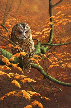 Autumn Tawny Owl Fine Art Print By Dr Jeremy Paul At
