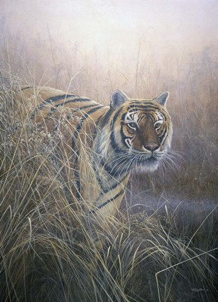 Framed Tiger At Dawn Print