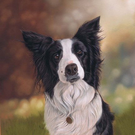Framed Collie Perdy Print