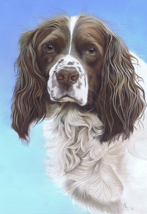 Framed Springer Spaniel Zac Print