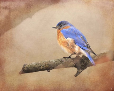 Framed Braving Autumn Bluebird Print
