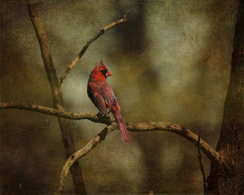 Framed Cardinal On A Branch Print