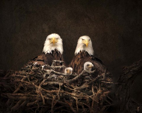 Framed Family Is Forever Bald Eagles Print