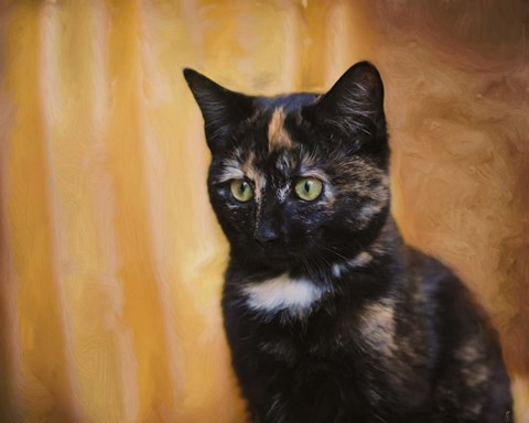 Framed Jeweled Eyes Tortoiseshell Kitten Print