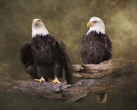 Framed Mates Bald Eagle Pair Print