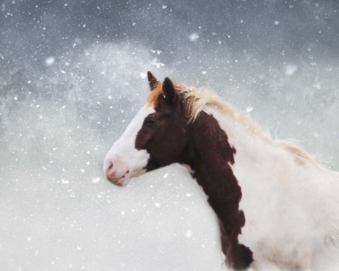 Framed Paint Horse In The Snow Print