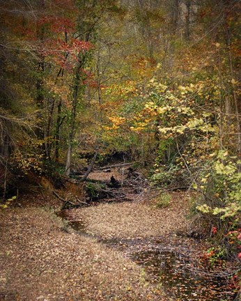 Framed Creek Bed In Autumn Print