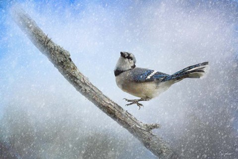 Framed Bluejay In The Snow Print