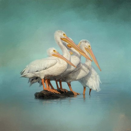 Framed We Are Family White Pelicans Print
