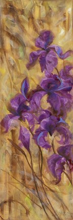 Framed Bearded Iris VII Print