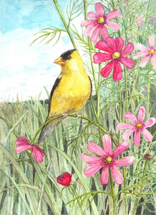 Framed Yellow Finch Cosmos Print