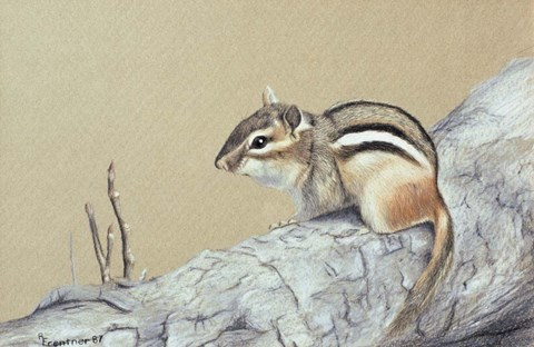 Framed Chipmunk Print