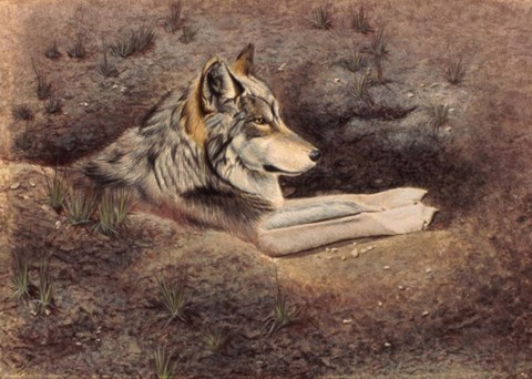 Framed Mexican Wolf Print