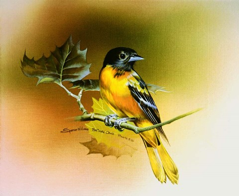 Framed Baltimore Oriole Print