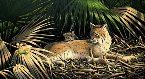 Framed Sunny Spot Bobcat with Kittens Print