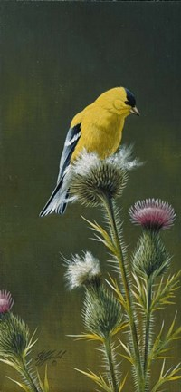 Framed Goldfinch On Thistle Print