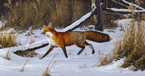 Framed Fox Trot  - Red Fox Print