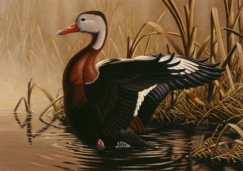 Framed 1988 Black Bellied Whistling Duck Print