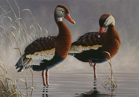 Framed 1989 Black Bellied Whistling Duck Print